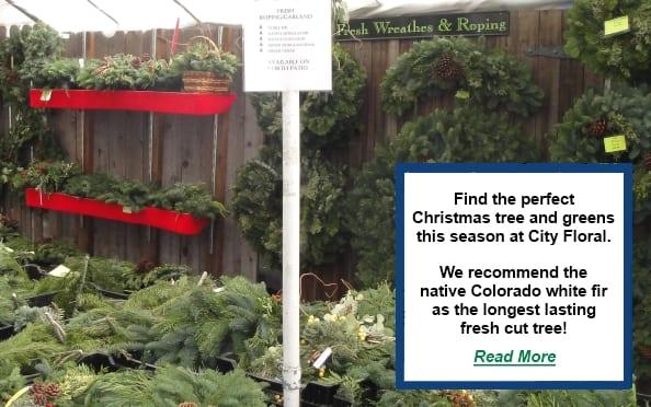 denver garden centers. Garden Centers Denver | Gardening Shop City Floral Center . E