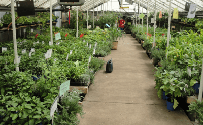 Herbs and Vegetable Plants for Every Season Available at City Floral Garden Center