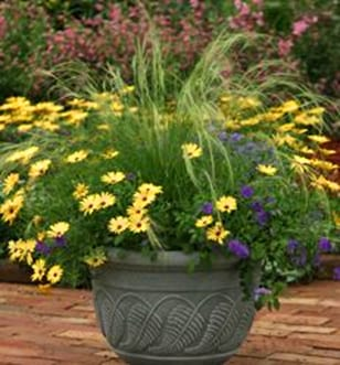 Guide to Container Gardening in Denver City Floral Greenhouse