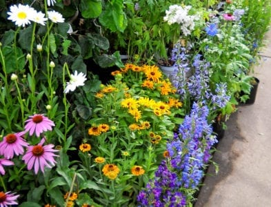 Perennials summer