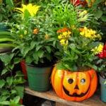 halloween-pot
