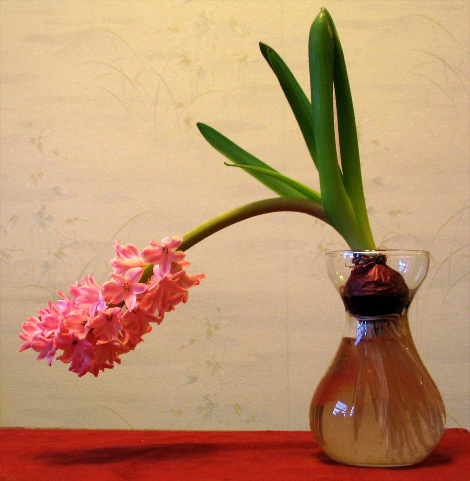 hyacinth glass pink Harmony-FlickrCC2.0