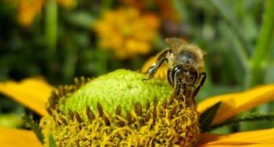 newsletter_bees