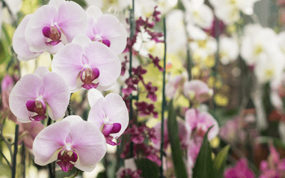 newsletter_orchid