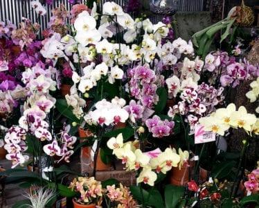 orchids 2 crop
