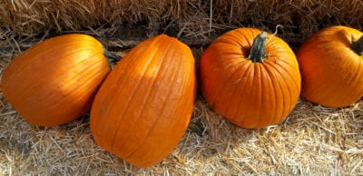 pumpkins-four-row