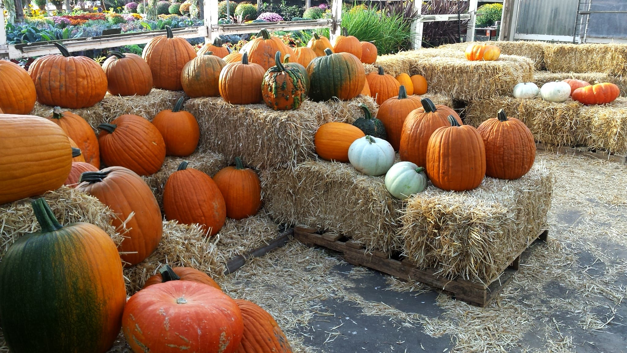 pumpkins patio