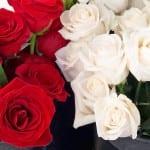roses red white