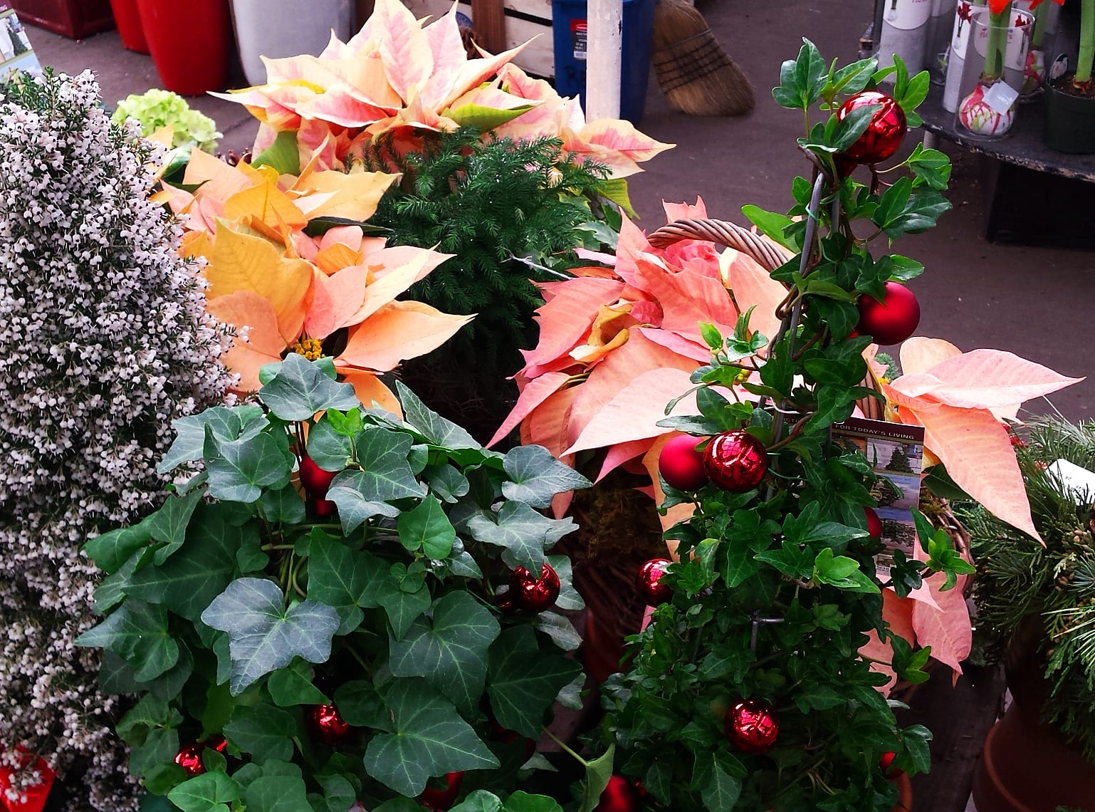 Christmas decorated tabletop topiary and peach poinsettias