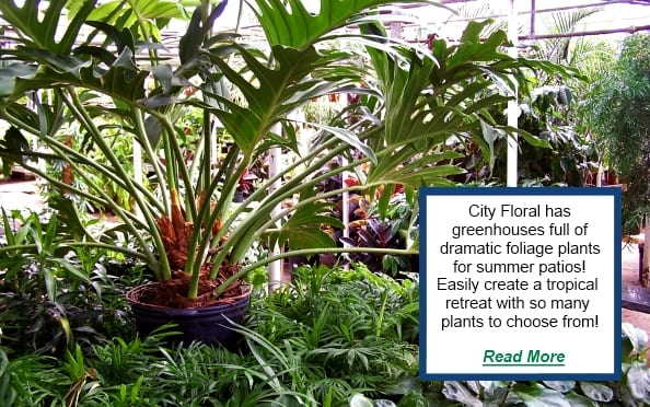cityfloral houseplants