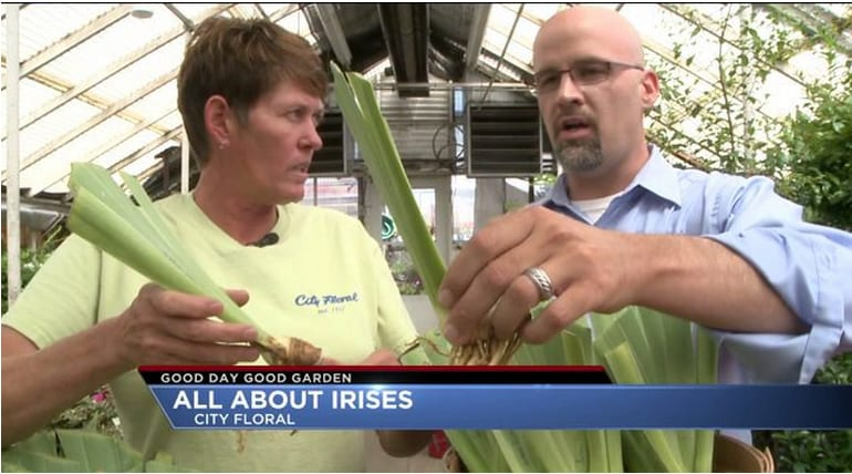 Good Day Good Garden- All About Irises