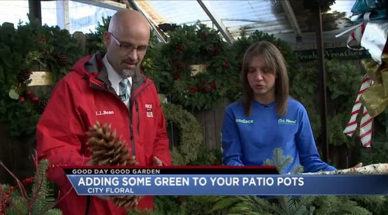 Good Day Good Garden - Adding Some Green to Your Holiday Patio Pots
