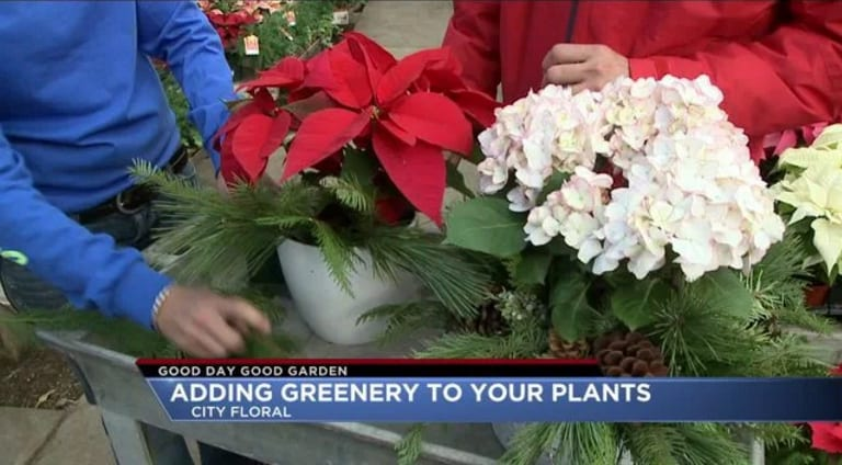 Good Day Good Garden Video - Adding Greenery to Your Holiday Plants