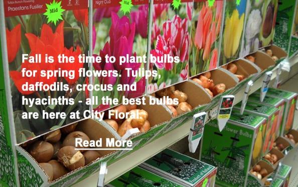 cityfloral bulbs