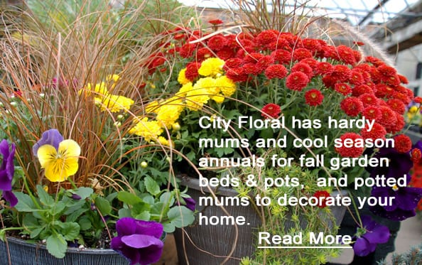 cityfloral mum pansy