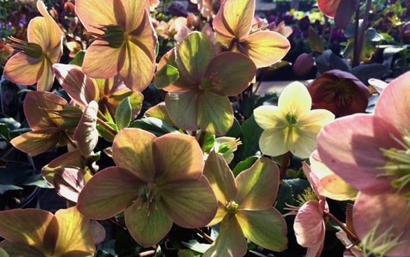 cityfloral st patrick plants march
