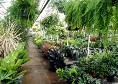 Foliage house 5 sm