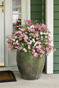 big pot entrance_f_35 petunias Proven Winners sm