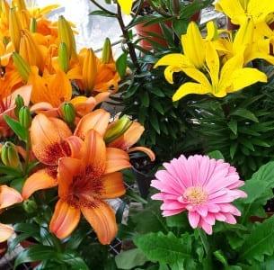 lilies gerbera