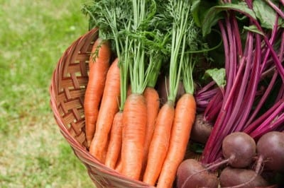 newsletter_carrots