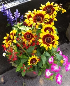 rudbeckia fall pot