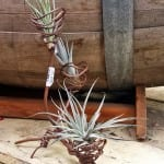 tillandsia holder coppe