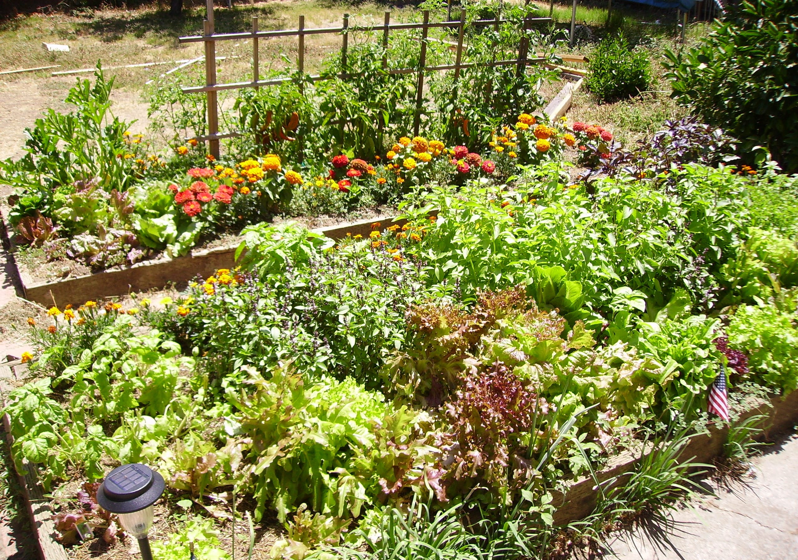Gardening Tips on Layout & Planning for Your First Vegetable ... on cinder blocks raised garden, raised bed flower garden design, veggie garden, raised garden planter boxes, raised backyard landscaping, raised backyard design, raised bed garden layouts, raised bed planting layout guides, raised backyard playground, raised vegetable beds, raised flower bed design ideas, raised garden layout plans, raised garden ideas,