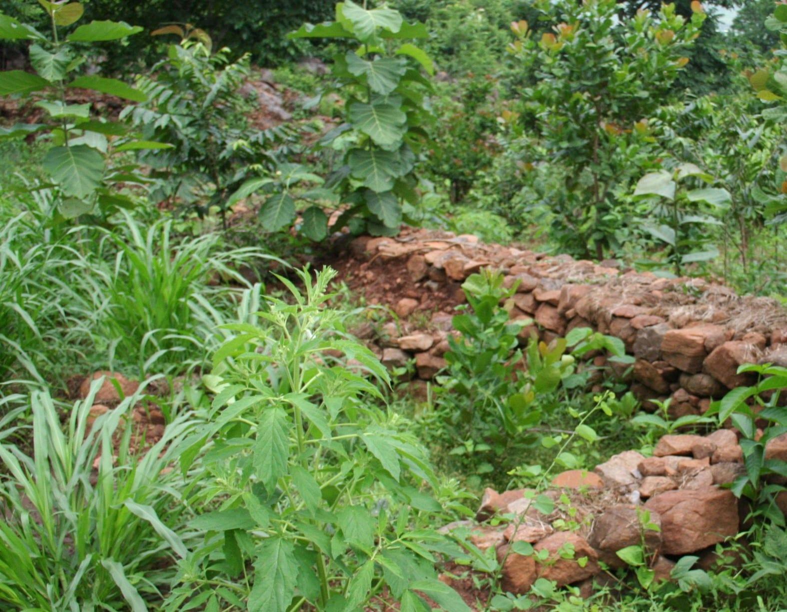 Discovering the Possibilities of Habitat Gardening in Denver