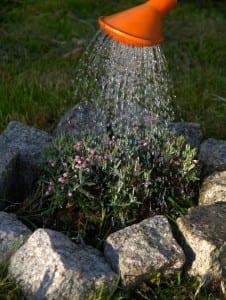 watering-323885_1280