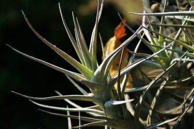 epiphyte-plant-347472_640