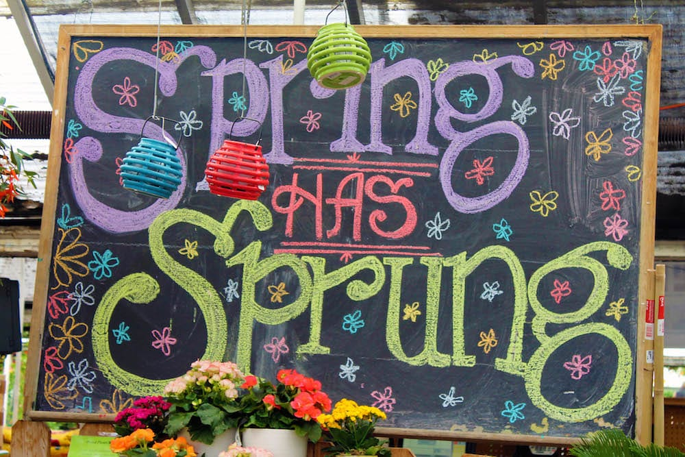 spring has sprung chalkboard display