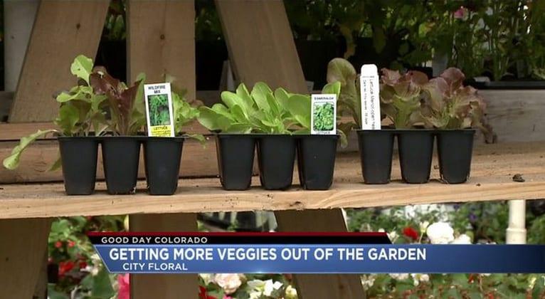 Good Day Good Garden Video: Getting More Veggies Out of the Garden