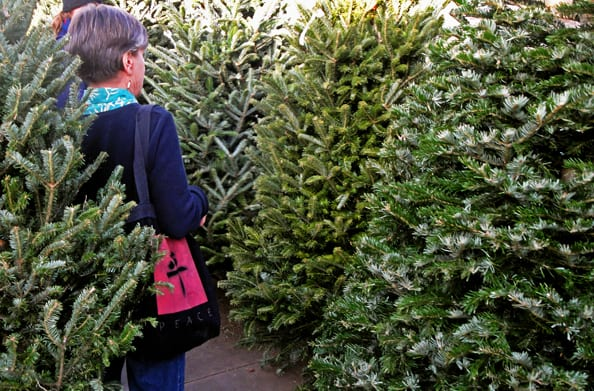 xmas trees shopping