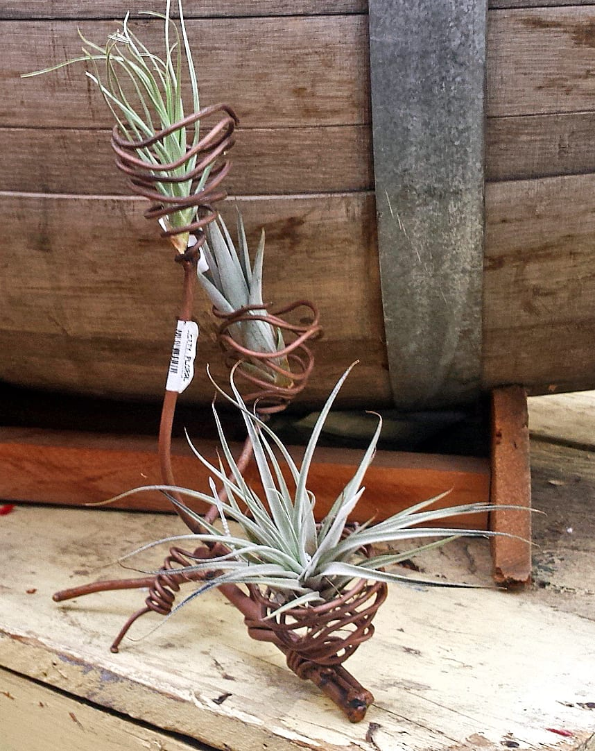 tillandsia holder copper