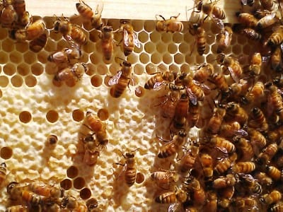 Beekeeping Basics: Creating Your Own Hive @ City Floral Garden Center | Denver | Colorado | United States