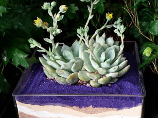 succulent sand container at city floral greenhouse and garden center