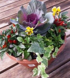 Fall Patio Pot Workshop @ City Floral Greenhouse | Denver | Colorado | United States