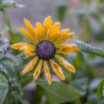 frost-Aki-Suomela-FlickrCC2.0