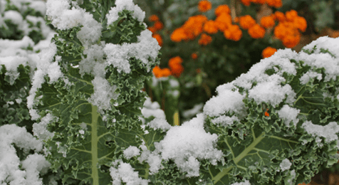 Welcome to crazy spring weather once again, Colorado … Brace yourselves, and your plants!