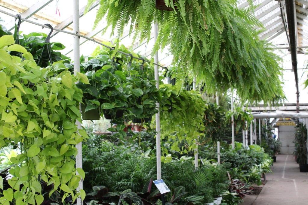 garden shop. Garden Shop