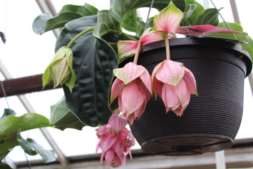 denver garden centers. Welcome To City Floral Garden Center. Denver\u0027s Denver Centers