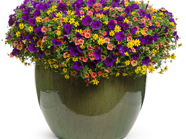 city floral greenhouse container gardens