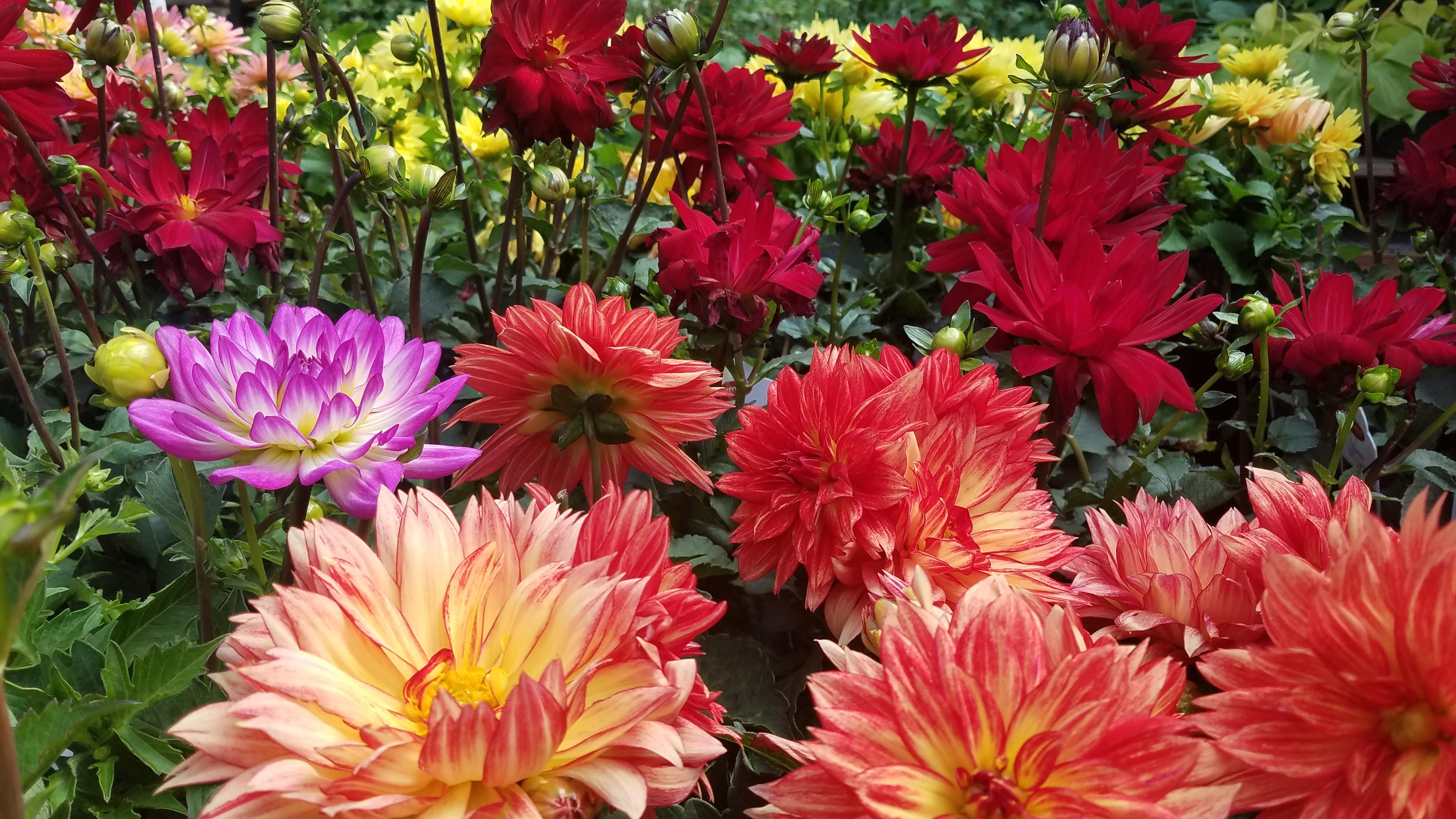 Annual Flowers Plants Denver