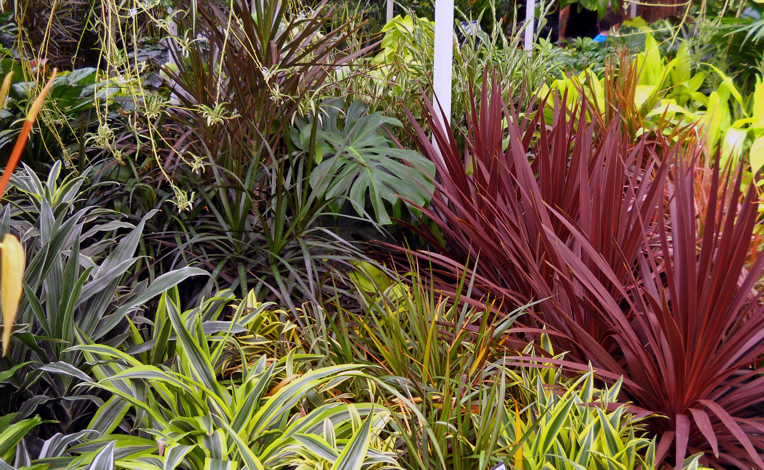 Denver Houseplants & Indoor Plants