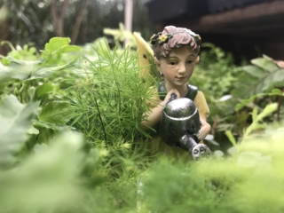 Fairy Figurine for fairy gardens at city floral greenhouse and garden center