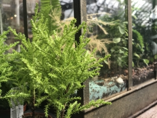 Miniature plants for terrariums and fairy gardens at city floral greenhouse and garden center