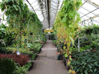 Denver greenhouse, houseplants