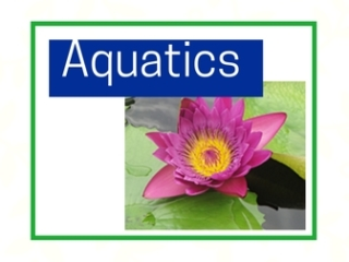 Aquatics and water gardens at City Floral Greenhouse and Garden Center