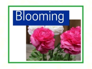 Blooming plants at City Floral Greenhouse and Garden Center
