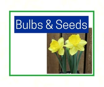 Bulbs and seeds at City Floral Greenhouse and Garden Center